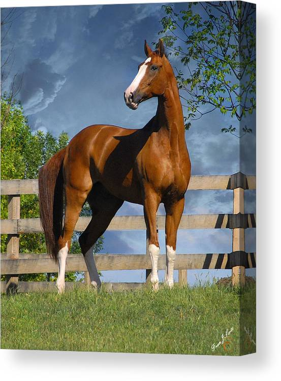 Horses Canvas Print featuring the photograph Welt Adel by Fran J Scott