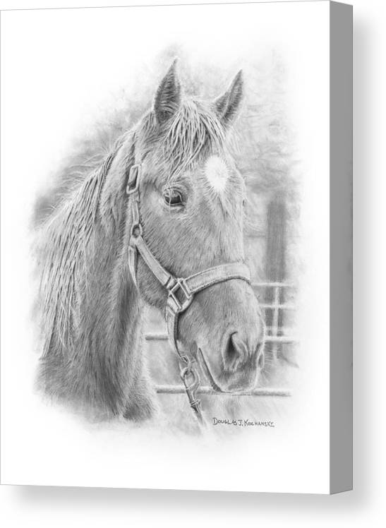 Horse Realistic Drawing Rendering Graphite Pencil Animal Western Canvas Print featuring the drawing Whistler by Douglas Kochanski