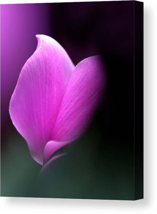 Flower Canvas Print featuring the photograph zen by Katherine Morgan