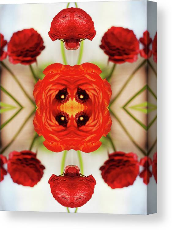 Tranquility Canvas Print featuring the photograph Ranunculus Flower by Silvia Otte