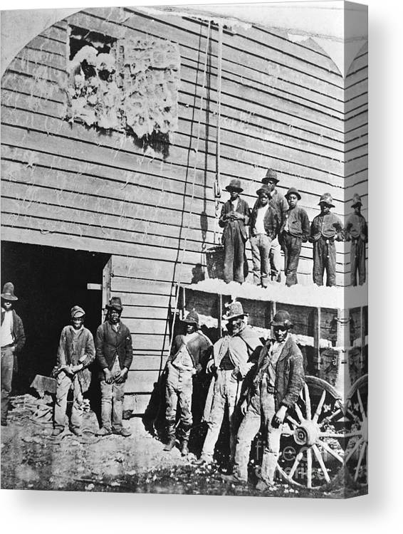 Working Canvas Print featuring the photograph Black Men At Cotton Barn by Bettmann