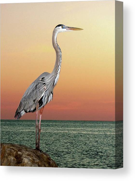 Scenics Canvas Print featuring the photograph Great Blue Heron In Seaside Sunset by Melinda Moore