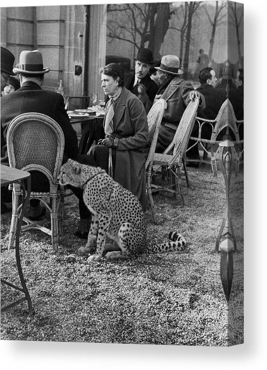 Pets Canvas Print featuring the photograph Pet Cheetah by Alfred Eisenstaedt