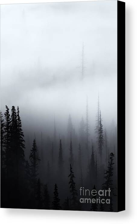 Forest Canvas Print featuring the photograph Piercing The Clouds by Mike Dawson