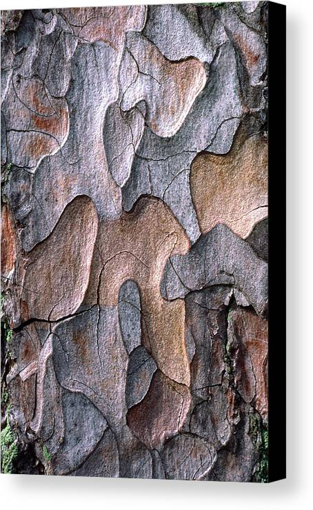 Plant Canvas Print featuring the photograph Scots Pine Bark Abstract by Nigel Downer