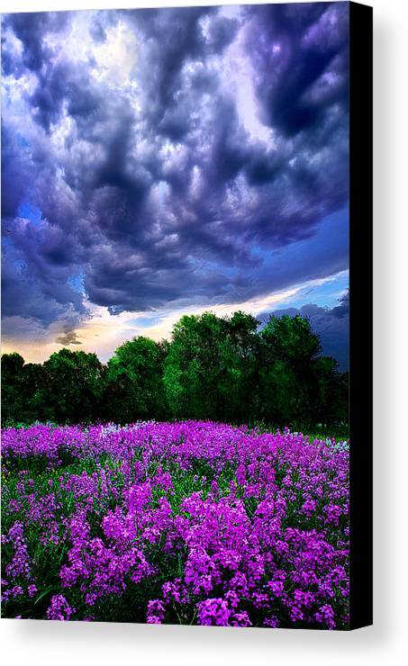 Lilacs Canvas Print featuring the photograph Lilacs by Phil Koch