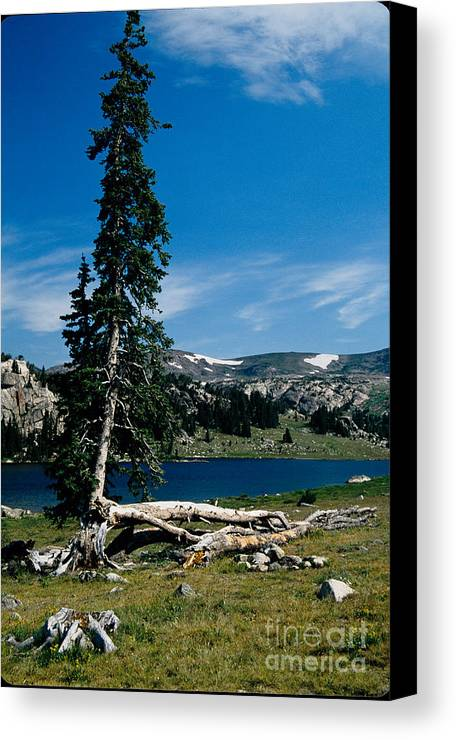 Mountains Canvas Print featuring the photograph Lone Tree At Pass by Kathy McClure