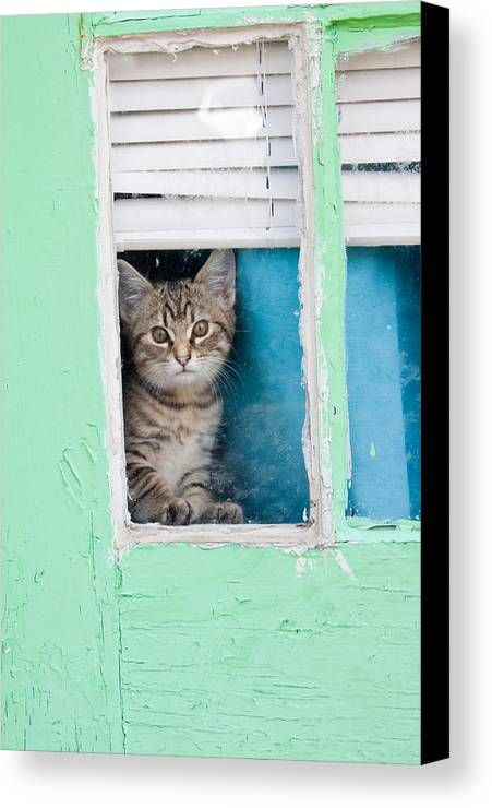 Kitty Canvas Print featuring the photograph Peek-a-boo by Jean Haynes