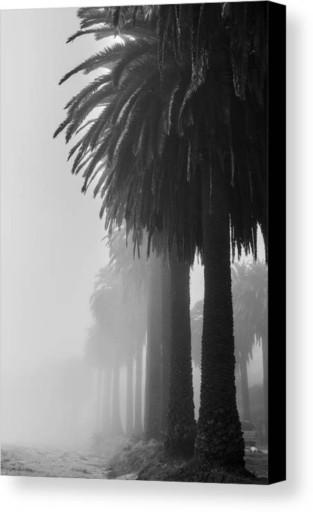 Palm Canvas Print featuring the photograph The Old Guard by Kelly Headrick