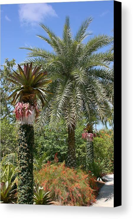 Palm Canvas Print featuring the photograph Tropical Garden by Kim Hojnacki