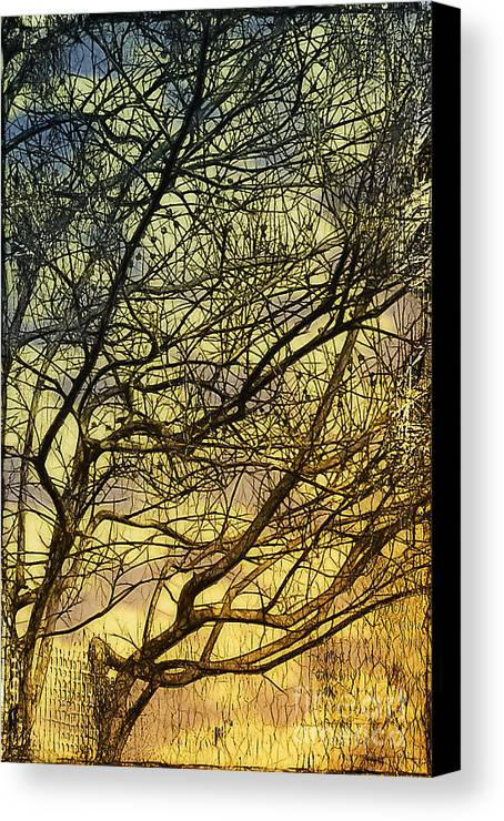 Gothic Canvas Print featuring the photograph Ghosts Of Crape Myrtles by Judi Bagwell