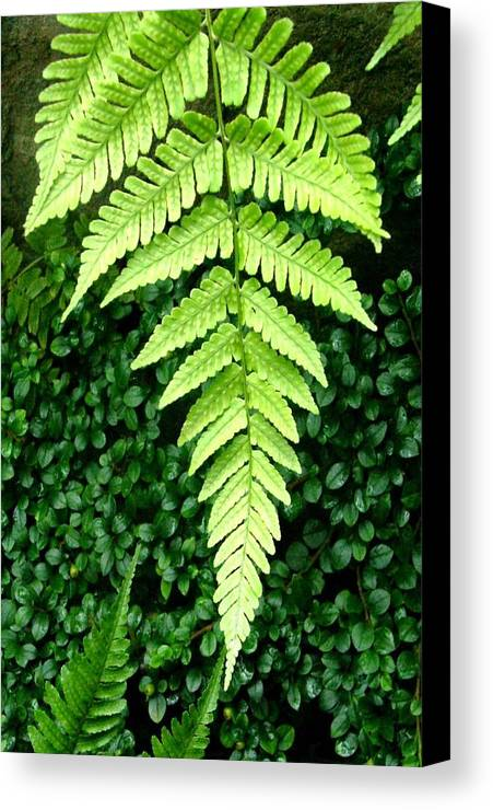 Fern Canvas Print featuring the photograph The Fern by Mindy Newman