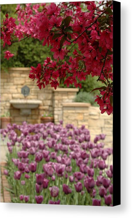 Tulips Canvas Print featuring the photograph Untitled by Kathy Schumann