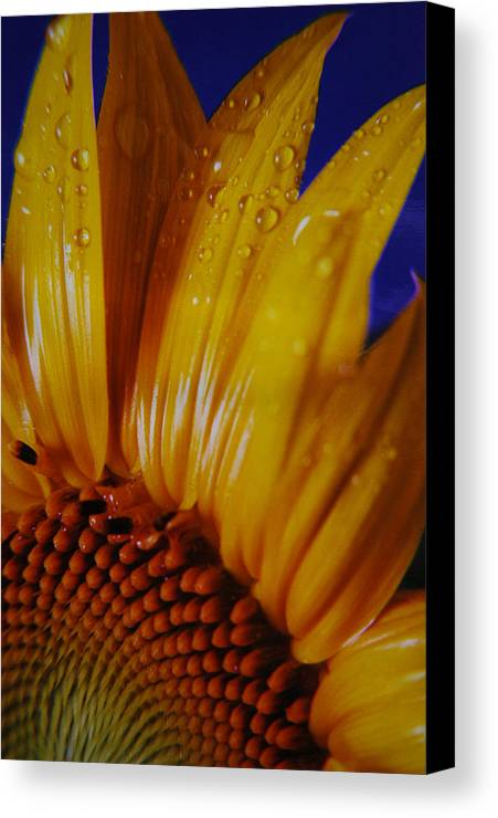 Floral Canvas Print featuring the photograph Against The Blue by Lori Mellen-Pagliaro