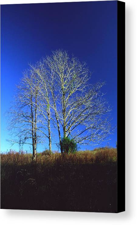 Landscape Canvas Print featuring the photograph Blue Tree In Tennessee by Randy Oberg