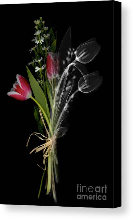 X-ray Canvas Print featuring the photograph Bouquet X-ray by Ted Kinsman