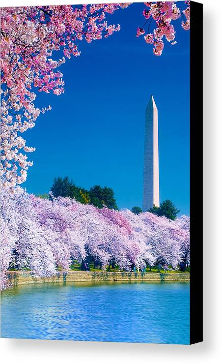 Cherry Blossoms Canvas Print featuring the photograph Cherry Blossoms by Don Lovett