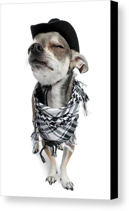 Vertical Canvas Print featuring the photograph Chihuahua Wearing A Scarf And A Cowboy Hat by Life On White