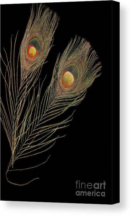 Two Canvas Print featuring the photograph Close Up Of An Abstract Peacock Feather by Jacqueline Moore