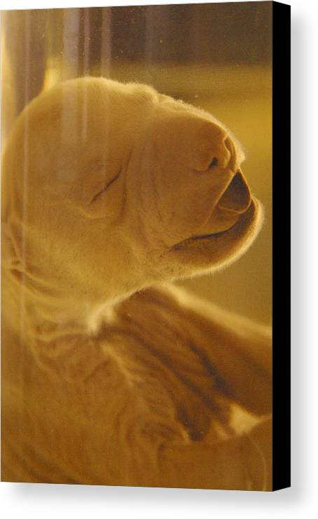 Jez C Self Canvas Print featuring the photograph Demised 2 by Jez C Self