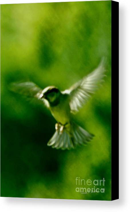 Animal Canvas Print featuring the photograph Feeling Free As A Bird Wall Art Print by Carol F Austin