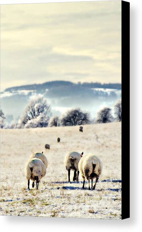 Landscape Canvas Print featuring the photograph Heading Home by Meirion Matthias