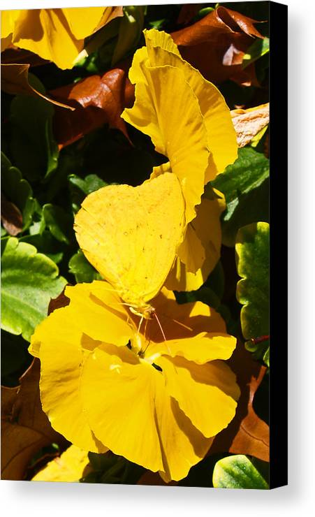 Floral Canvas Print featuring the photograph Nature's Disquise IIi by James Granberry