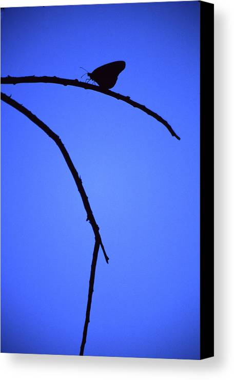 Nature Canvas Print featuring the photograph Natures Elegance by Randy Oberg