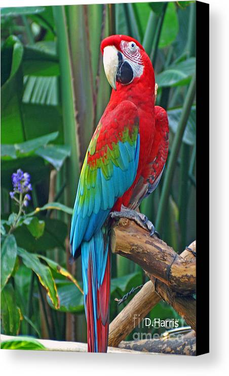 Birds Canvas Print featuring the photograph Parrot by Dawn Harris