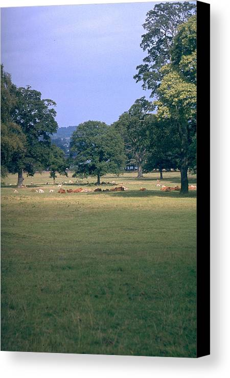 Great Britain Canvas Print featuring the photograph Pasture by Flavia Westerwelle
