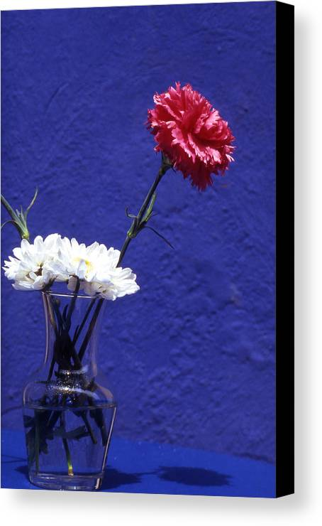Blue; Bloom; Beauty In Nature; Botany; Carnation; Close-up; Close; Up; Crete; Color; Canvas Print featuring the photograph Red Carnation by Steve Outram