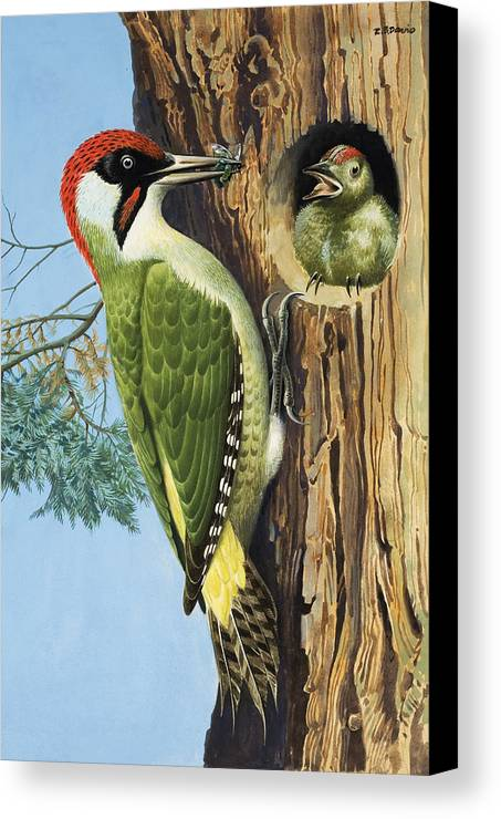 Woodpecker Canvas Print featuring the painting Woodpecker by RB Davis