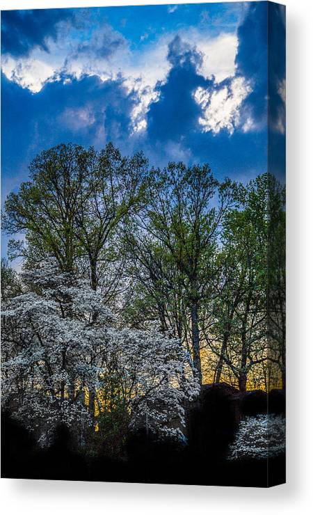 Tree Canvas Print featuring the photograph Dogwoods And Dramatic Sky by Karen Saunders