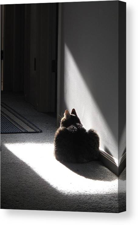 Cat Canvas Print featuring the photograph Everybody Needs A Sunny Spot by Louise St Romain
