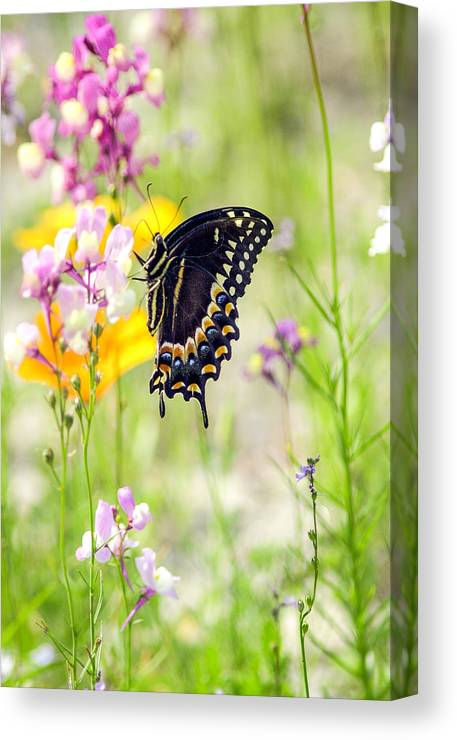 Wildflowers Canvas Print featuring the photograph Wildflowers And Butterfly by Bill LITTELL