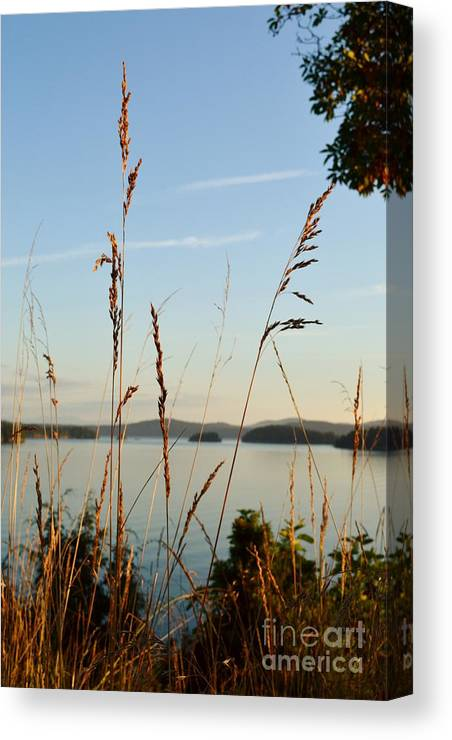 Grass Canvas Print featuring the photograph Evening Light by Laurie Runyan