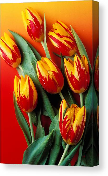 Tulip Canvas Print featuring the photograph Flame Tulips by Garry Gay