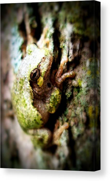 Tree Frog Canvas Print featuring the photograph Leveli Beka Ketto by Scot Johnson