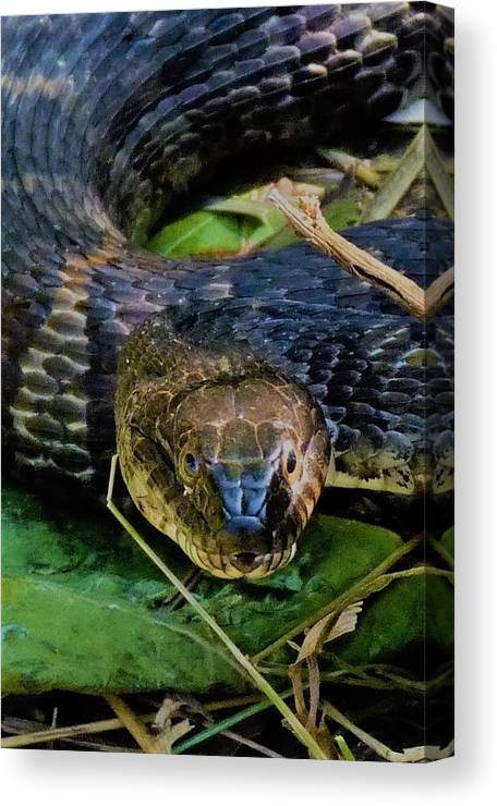 Snake Canvas Print featuring the photograph Snakehead by Donjoe Mitchell