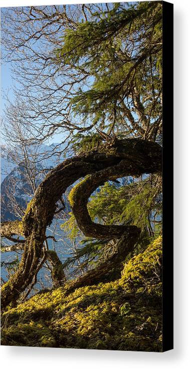 Southeast Alaska Canvas Print featuring the photograph Crouching Dragon by Michele Cornelius