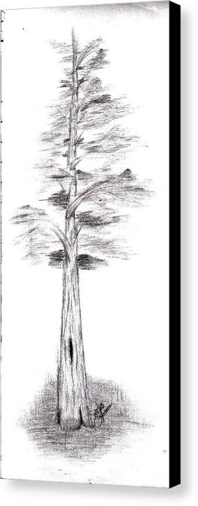 Canvas Print featuring the drawing Pine Tree by Lynnette Jones