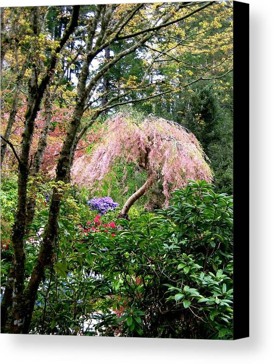 Scenery Canvas Print featuring the photograph Hidden Beauty by Shirley Sirois