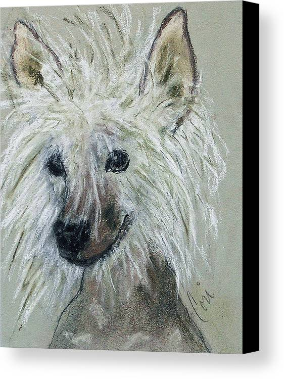 Chinese Crested Canvas Print featuring the drawing Crested Star by Cori Solomon