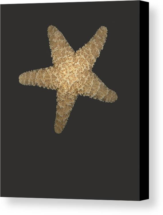 Starfish Canvas Print featuring the photograph Solo Starfish I by Suzanne Gaff