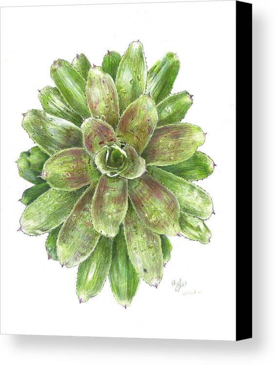 Neoregelia Canvas Print featuring the drawing Celebration by Steve Asbell