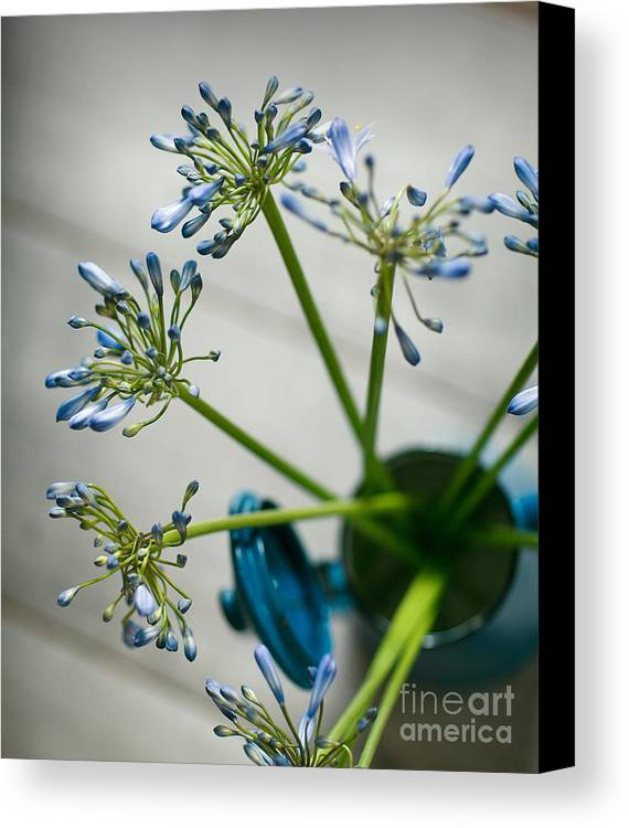 Still Canvas Print featuring the photograph Still Life 01 by Nailia Schwarz
