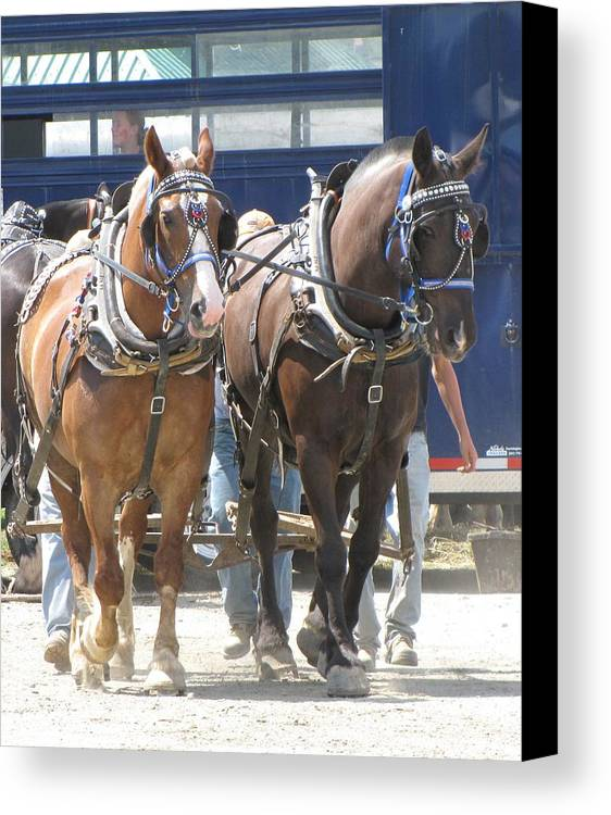 Horses Canvas Print featuring the photograph Horse Pull J by Melissa Parks