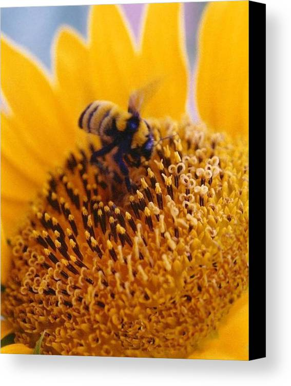 Honeybee Canvas Print featuring the photograph Monday Morning by Diane Backs-Mancuso