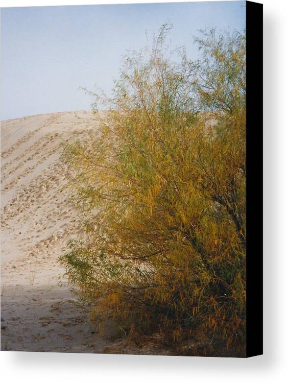 Sands Monohans Bush Trees Footprints Canvas Print featuring the photograph Sands Of Monahans - 2 by Cindy New