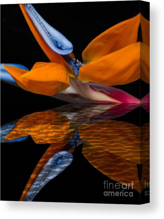 Bird Of Paradise Canvas Print featuring the photograph Bird Of Paradise Reflective Pool by Michael Moriarty